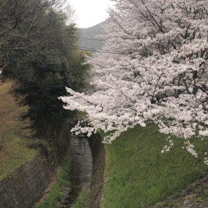 桜2021_2