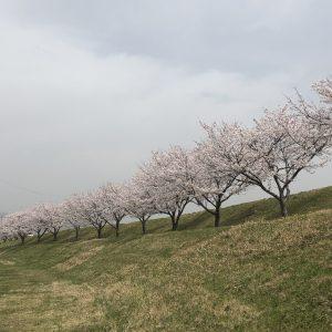 桜2021_1